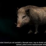 Far cry 4 - Divočák